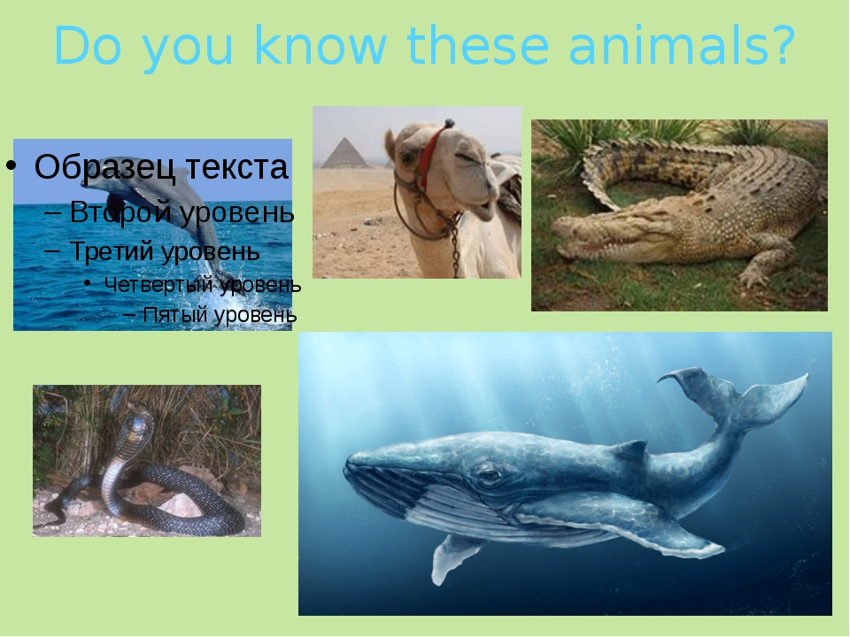 Do you know these animals?