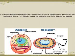 Самовоспроизведение путём деления – общее свойство клеток одноклеточных и мно