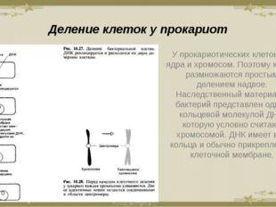 Деление клеток у прокариот У прокариотических клеток нет ядра и хромосом. Поэ
