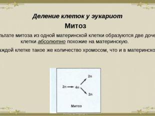 Деление клеток у эукариот Митоз В результате митоза из одной материнской клет
