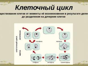 Клеточный цикл - существование клетки от моменты её возникновения в результат