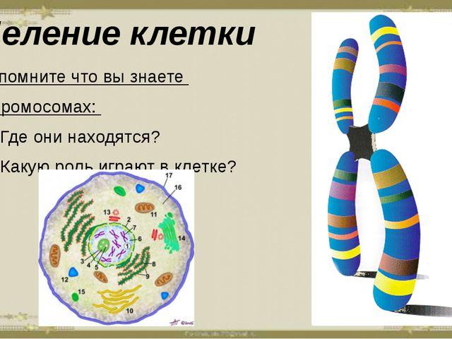 Деление клетки Вспомните что вы знаете о хромосомах: Где они находятся? Какую...