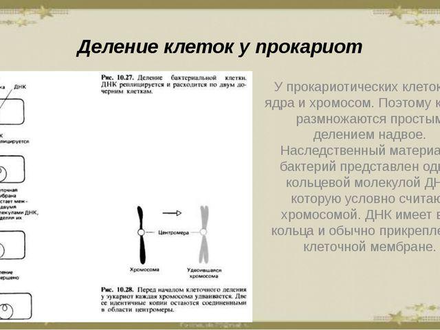 Деление клеток у прокариот У прокариотических клеток нет ядра и хромосом. Поэ...