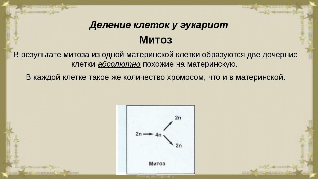 Деление клеток у эукариот Митоз В результате митоза из одной материнской клет...