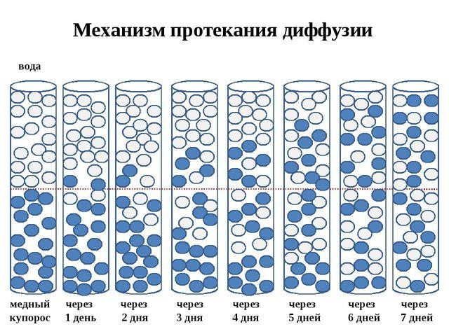 Механизм протекания диффузии вода медный купорос через 1 день через 2 дня чер...