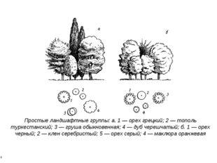 * * Простые ландшафтные группы: а. 1 — орех грецкий; 2 — тополь туркестанский