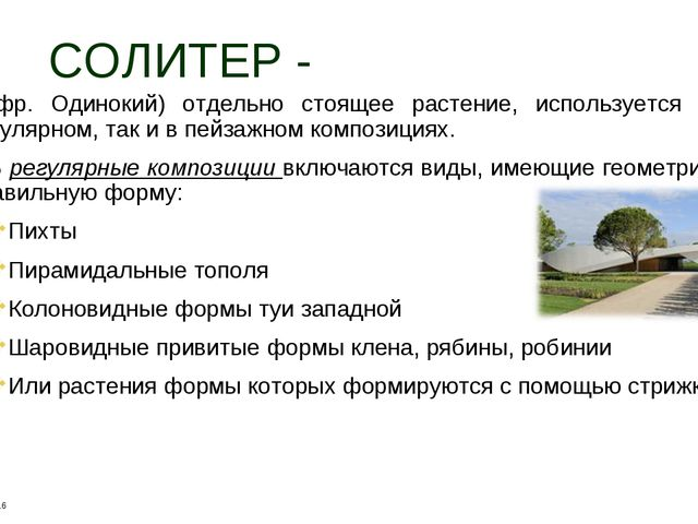 СОЛИТЕР - (фр. Одинокий) отдельно стоящее растение, используется как в регуля...