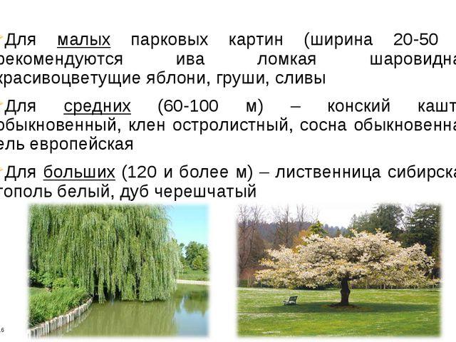 Для малых парковых картин (ширина 20-50 м) рекомендуются ива ломкая шаровидна...