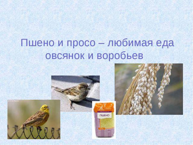 Пшено и просо – любимая еда овсянок и воробьев