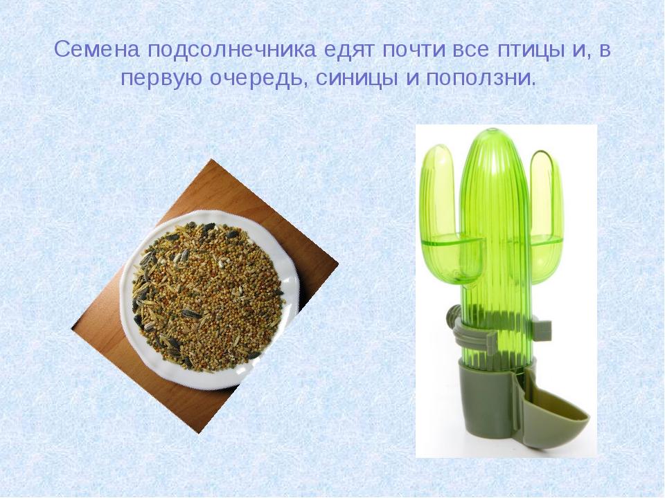 Семена подсолнечника едят почти все птицы и, в первую очередь, синицы и попол...