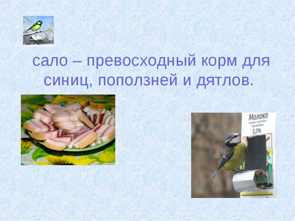 сало – превосходный корм для синиц, поползней и дятлов.