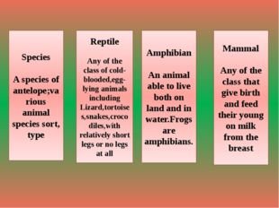 Species A species of antelope;various animal species sort, type Reptile Any o