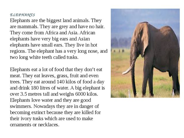 ELEPHANTS Elephants are the biggest land animals. They are mammals. They are...