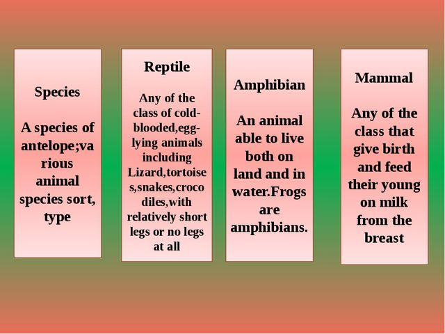 Species A species of antelope;various animal species sort, type Reptile Any o...
