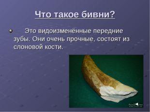Что такое бивни? Это видоизменённые передние зубы. Они очень прочные, состоят
