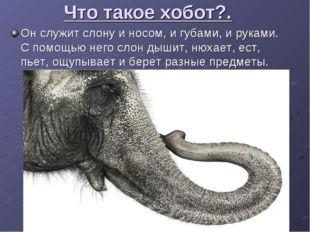 Что такое хобот?. Он служит слону и носом, и губами, и руками. С помощью него