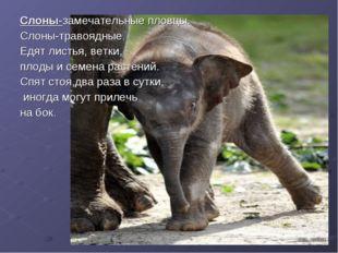 Слоны-замечательные пловцы. Слоны-травоядные. Едят листья, ветки, плоды и сем