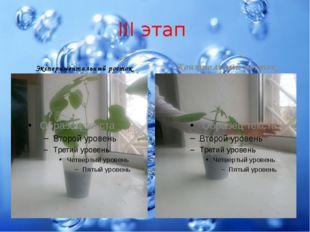 III этап Экспериментальный росток Контрольный росток