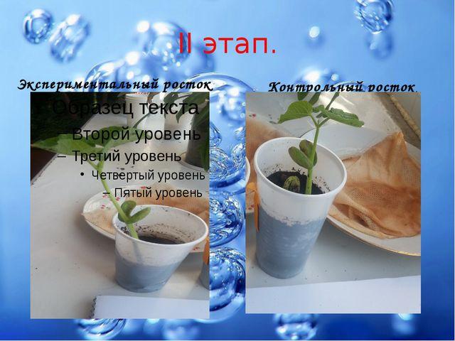 II этап. Экспериментальный росток Контрольный росток