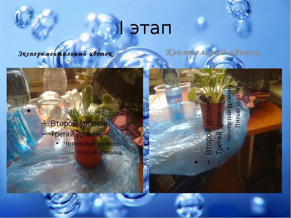 I этап Экспериментальный цветок Контрольный цветок
