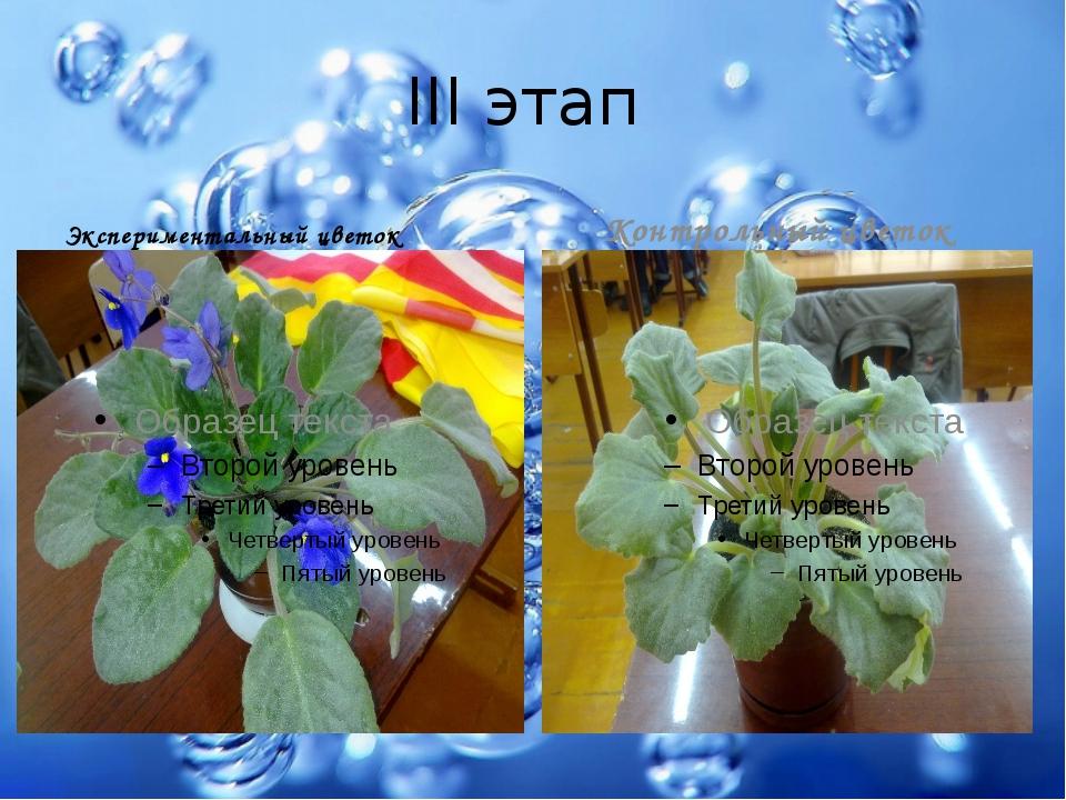 III этап Экспериментальный цветок Контрольный цветок