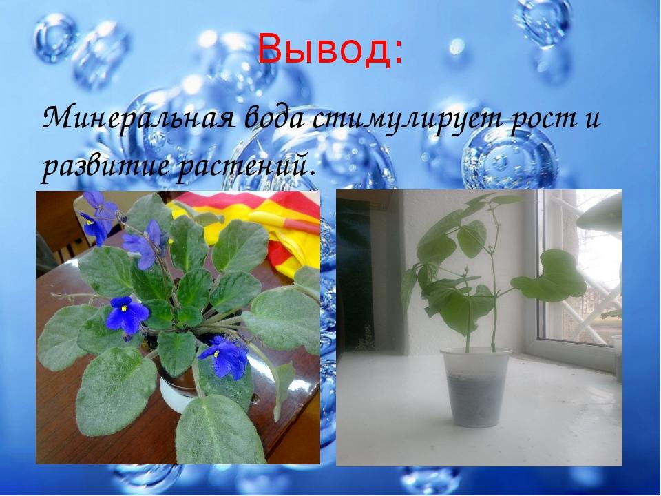 Вывод: Минеральная вода стимулирует рост и развитие растений.