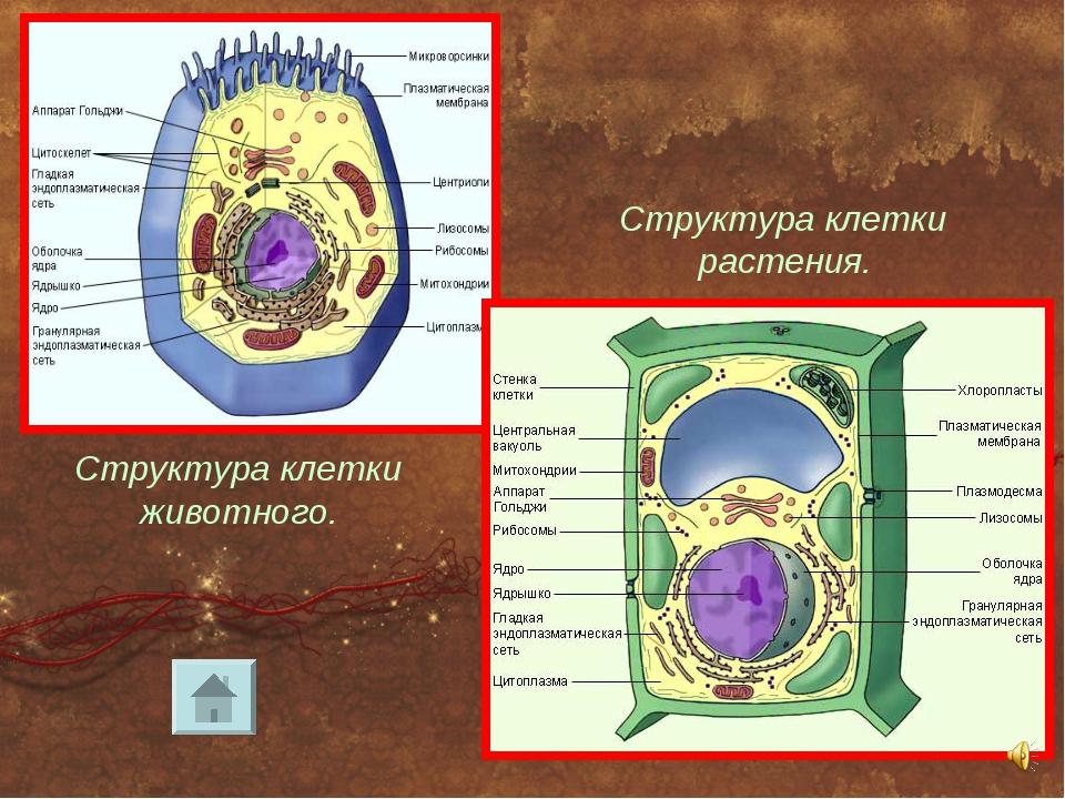 кущах шатрах клетка состав картинки токио