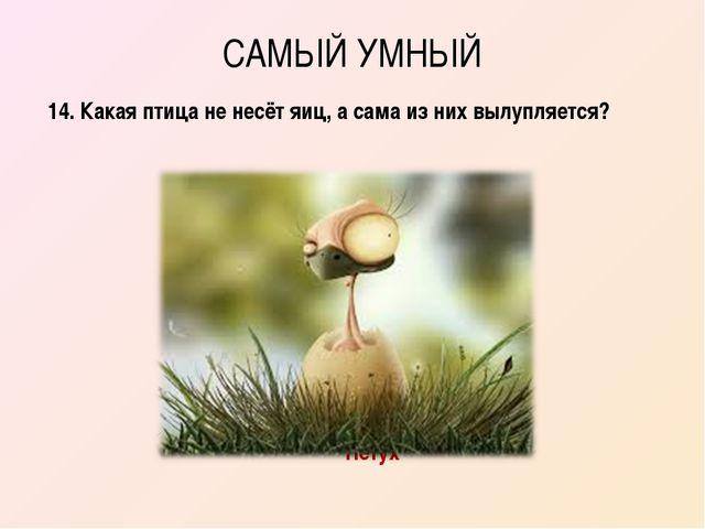 САМЫЙ УМНЫЙ 14. Какая птица не несёт яиц, а сама из них вылупляется? Петух