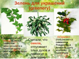 Зелень для украшений (greenery) Остролист (Holly)является символом Рождества
