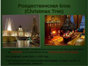 Рождественская ёлка (Christmas Tree) В начале декабря традиционная ёлка высот