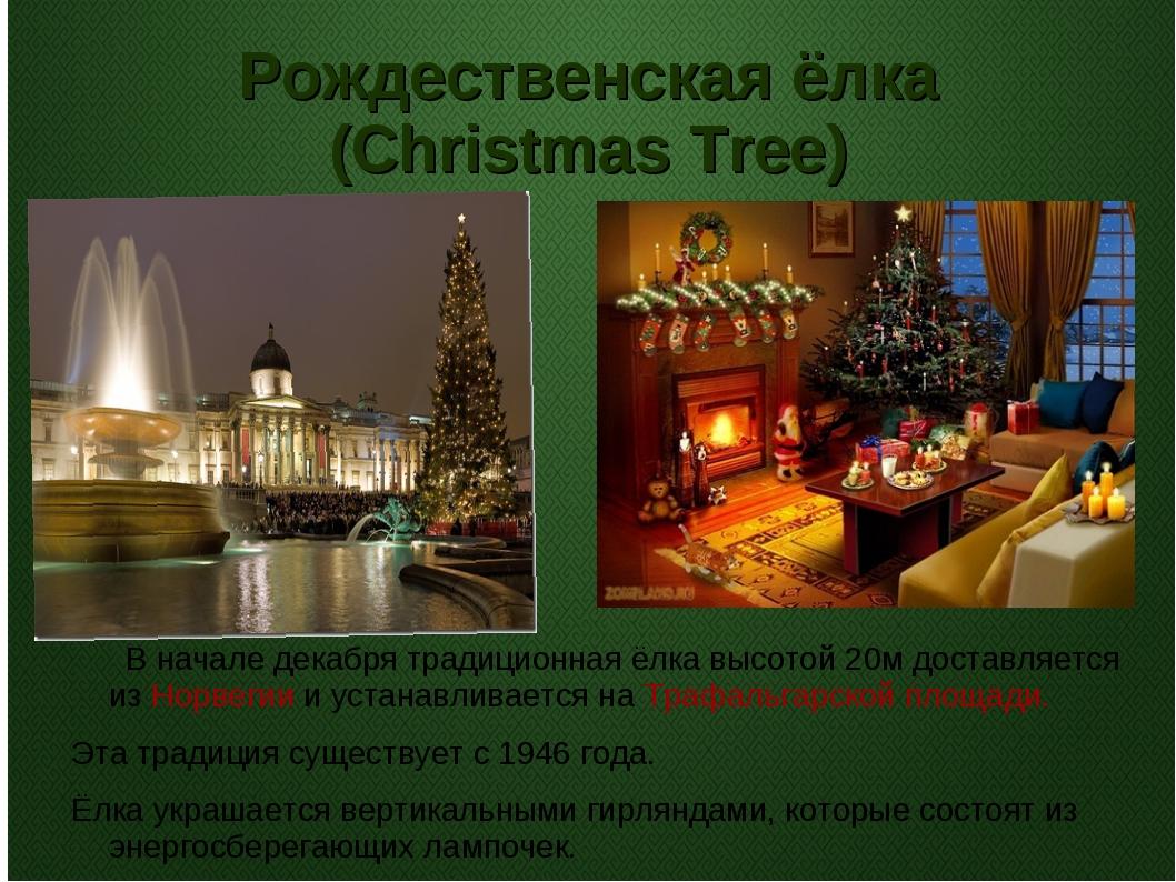 Рождественская ёлка (Christmas Tree) В начале декабря традиционная ёлка высот...