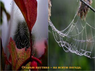 Осенью паутина – на ясную погода.