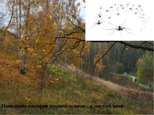 Поздний листопад – к суровой продолжительной зиме. Появление комаров поздней