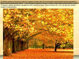 Особенно красив и печален русский лес в ранние осенние дни. На золотом фоне п