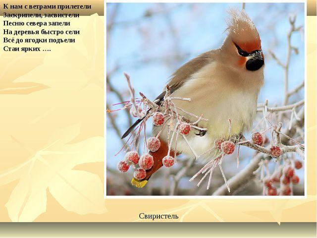 К нам с ветрами прилетели Заскрипели, засвистели Песню севера запели На дерев...