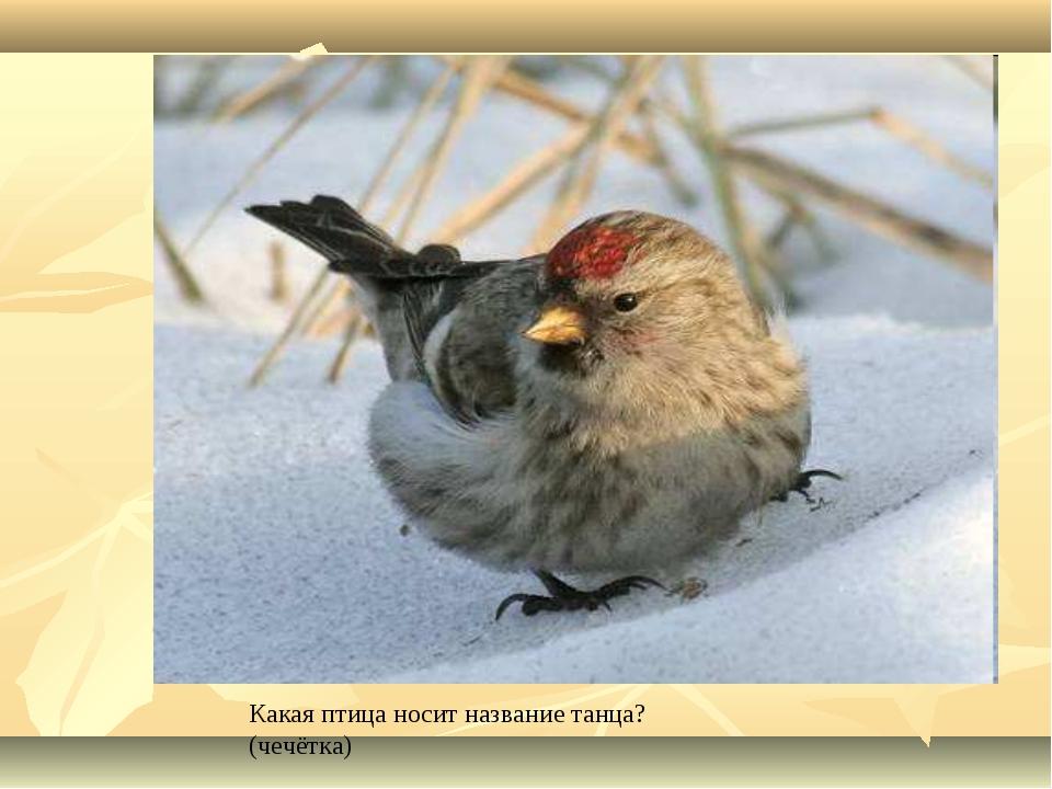 Какая птица носит название танца? (чечётка)