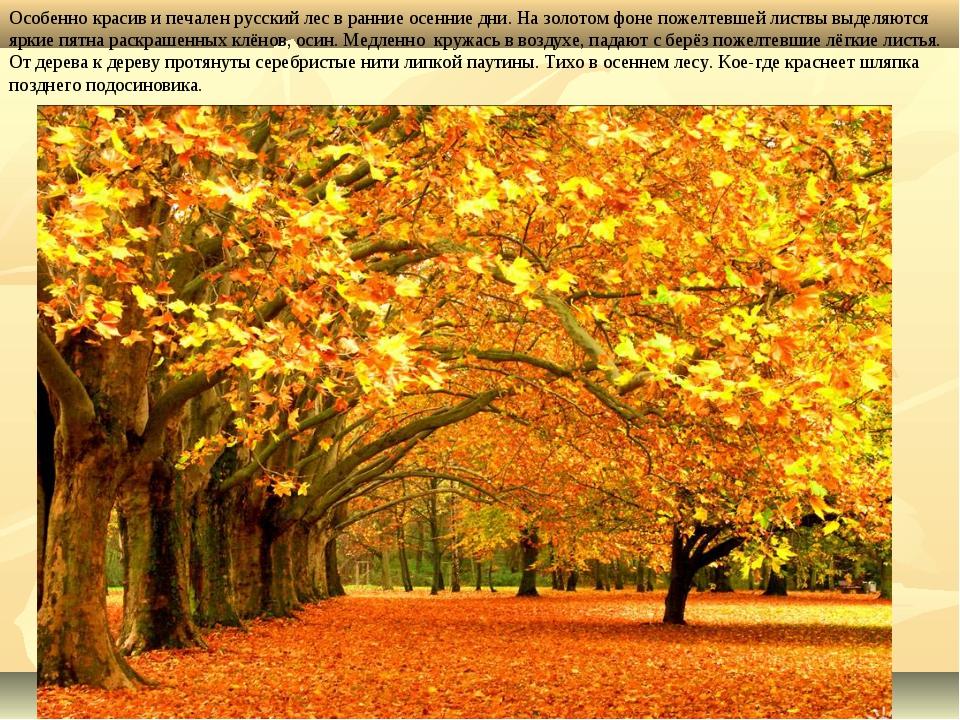 Особенно красив и печален русский лес в ранние осенние дни. На золотом фоне п...