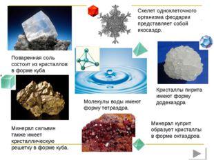 Поваренная соль состоит из кристаллов в форме куба Скелет одноклеточного орга