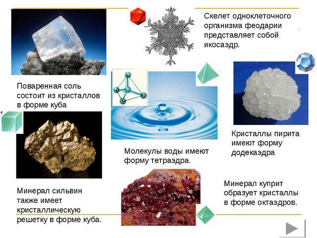 Поваренная соль состоит из кристаллов в форме куба Скелет одноклеточного орга...
