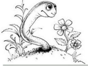 Сезім мүшелері шұбалшаң Топырақта тіршілік етуіне байланысты жақсы дамымамаға