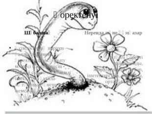 Қоректенуі Шұбалшаң Өсімдіктердің шіріген қалдықтарымен қоректенеді. Асқорыту
