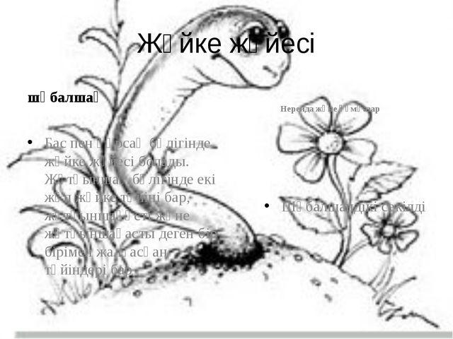 Жүйке жүйесі шұбалшаң Бас пен құрсақ бөлігінде жүйке жүйесі болады. Жұтқыншақ...