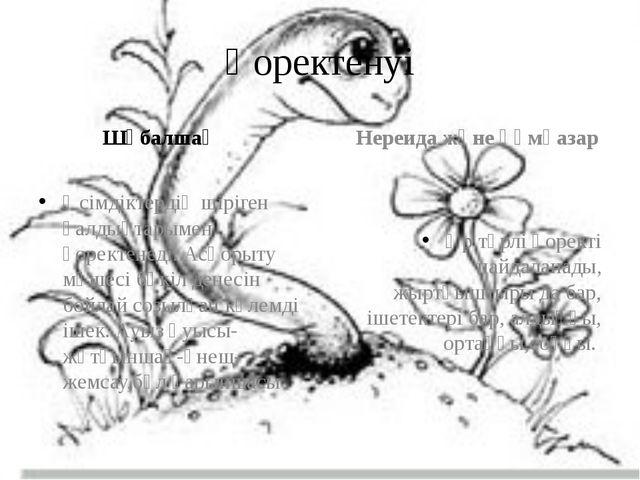 Қоректенуі Шұбалшаң Өсімдіктердің шіріген қалдықтарымен қоректенеді. Асқорыту...