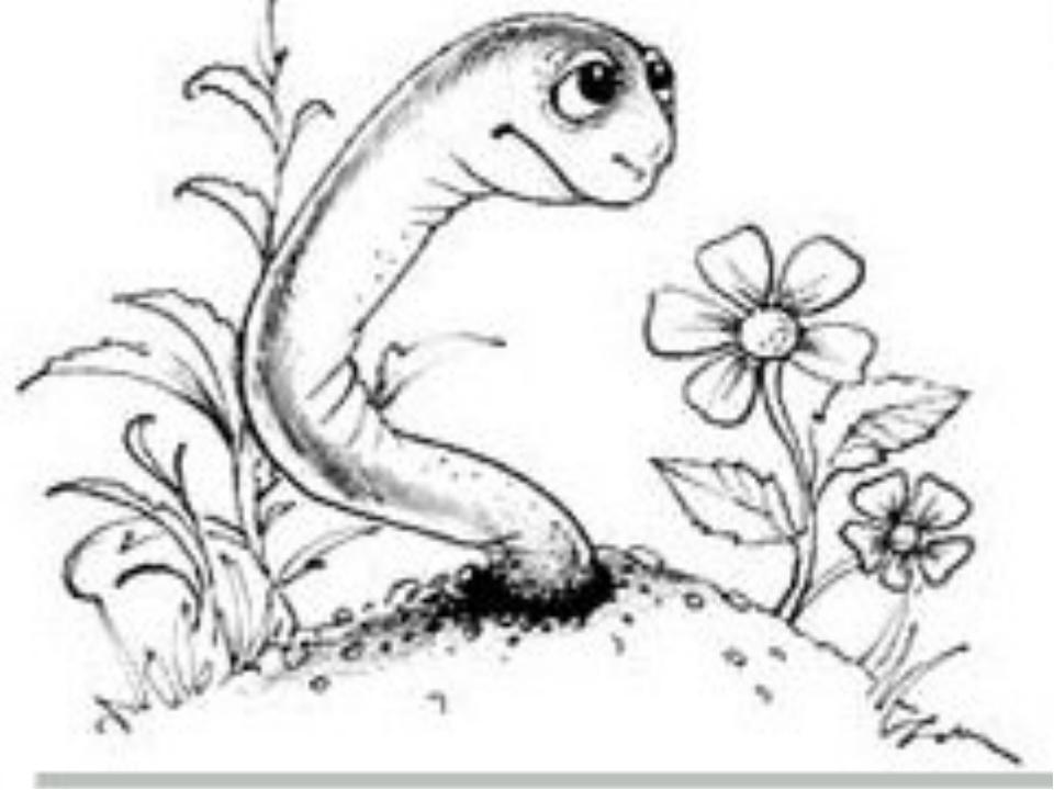 Көбеюі шұбалшаң Қосжынысты, яғни гермафродитті, пілдесі болады Нереида және қ...
