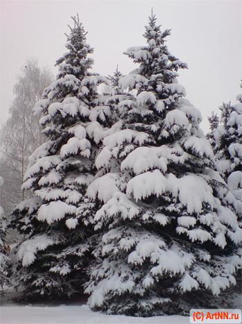 http://blog.artnn.ru/images_2008/elki_v_zimnem_lesu_small.jpg