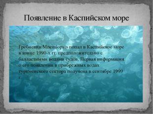 Появление в Каспийском море Гребневик Mnemiopsis попал в Каспийское море в к