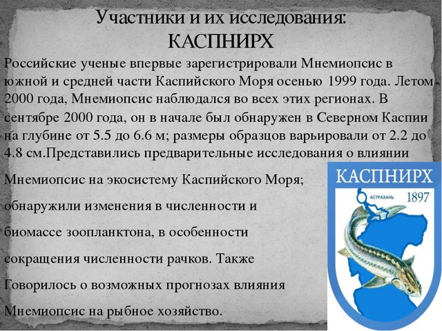 Российские ученые впервые зарегистрировали Мнемиопсис в южной и средней части...