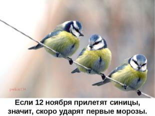 Если 12 ноября прилетят синицы, значит, скоро ударят первые морозы.