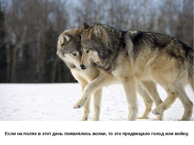 Если на полях в этот день появлялись волки, то это предвещало голод или войну.