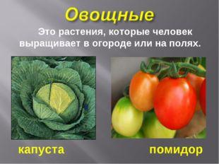 Это растения, которые человек выращивает в огороде или на полях. капуста пом